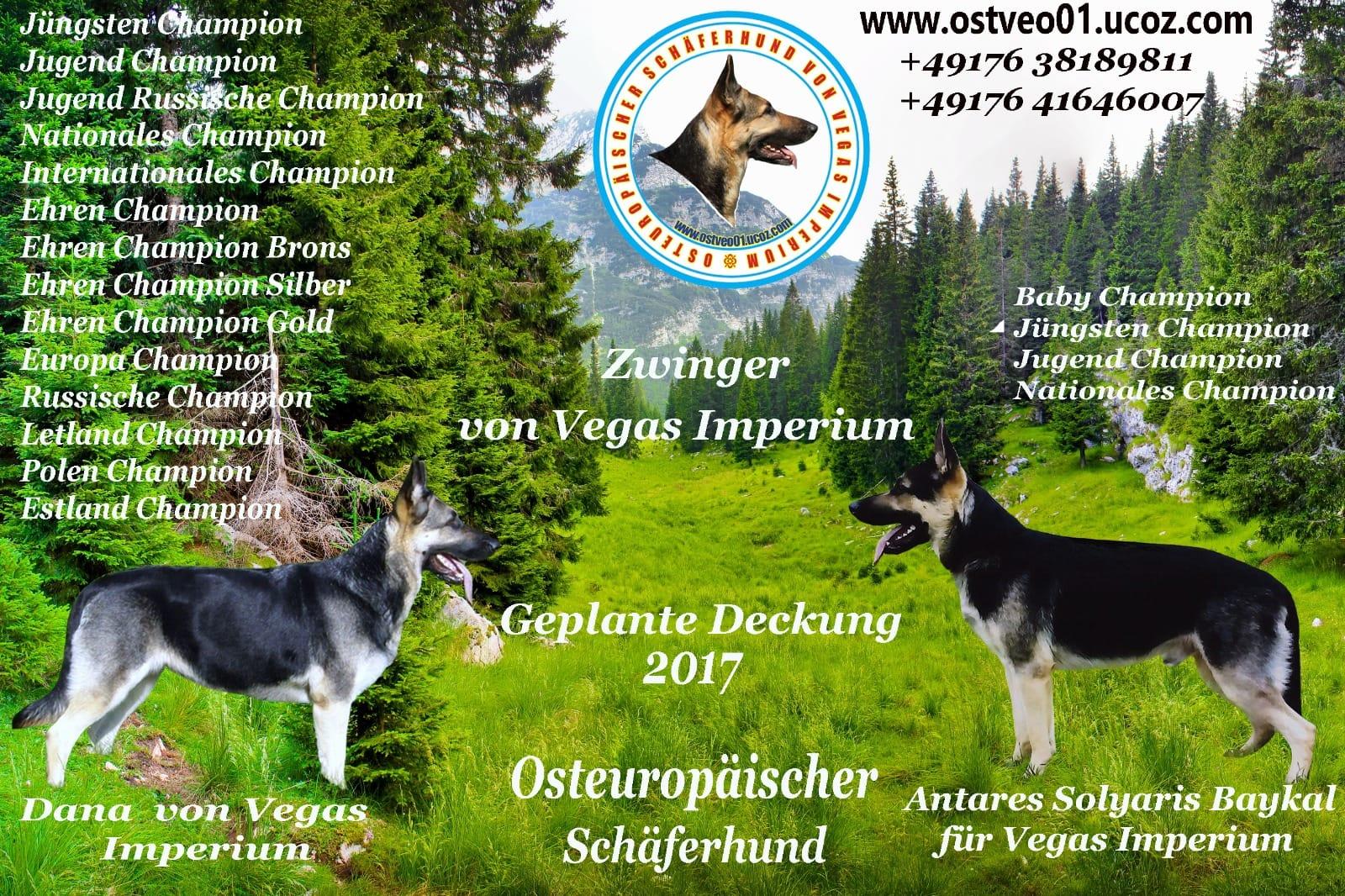 Tierheim nrw deutscher schaferhund