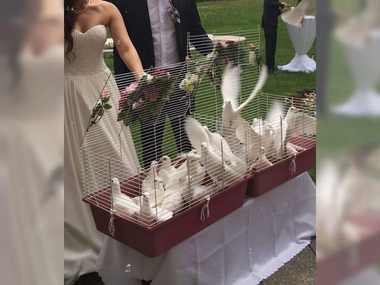 Hochzeitstauben munchen