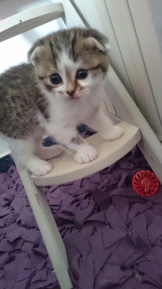 Katzenbabys (Mischlingskatzen) (Kaufen