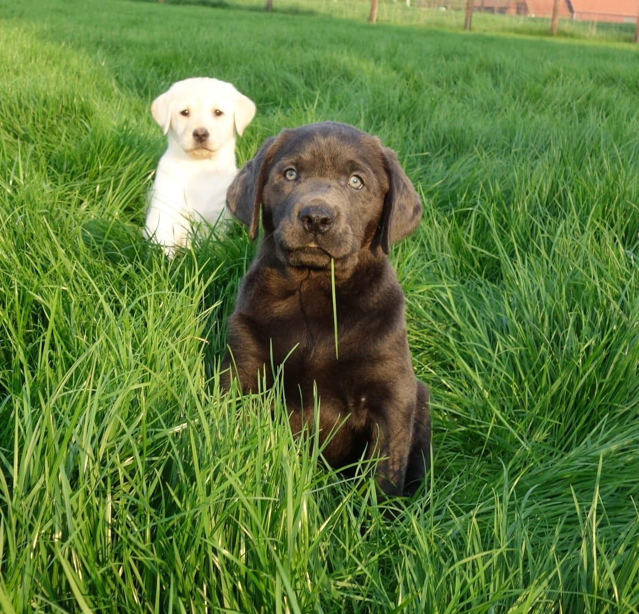 Hunde / Welpen (Kaufen & Verkaufen) | Deutschland Seite 4 - Haustier ...