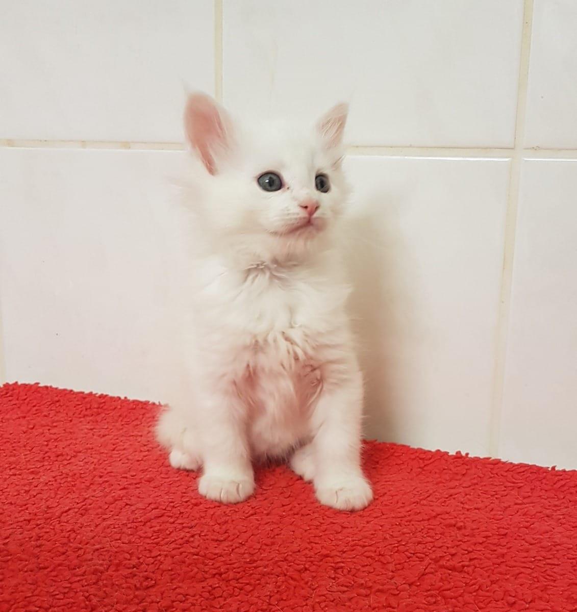 Ziemlich Süße Kätzchen Malvorlagen Fotos - Malvorlagen Von Tieren ...