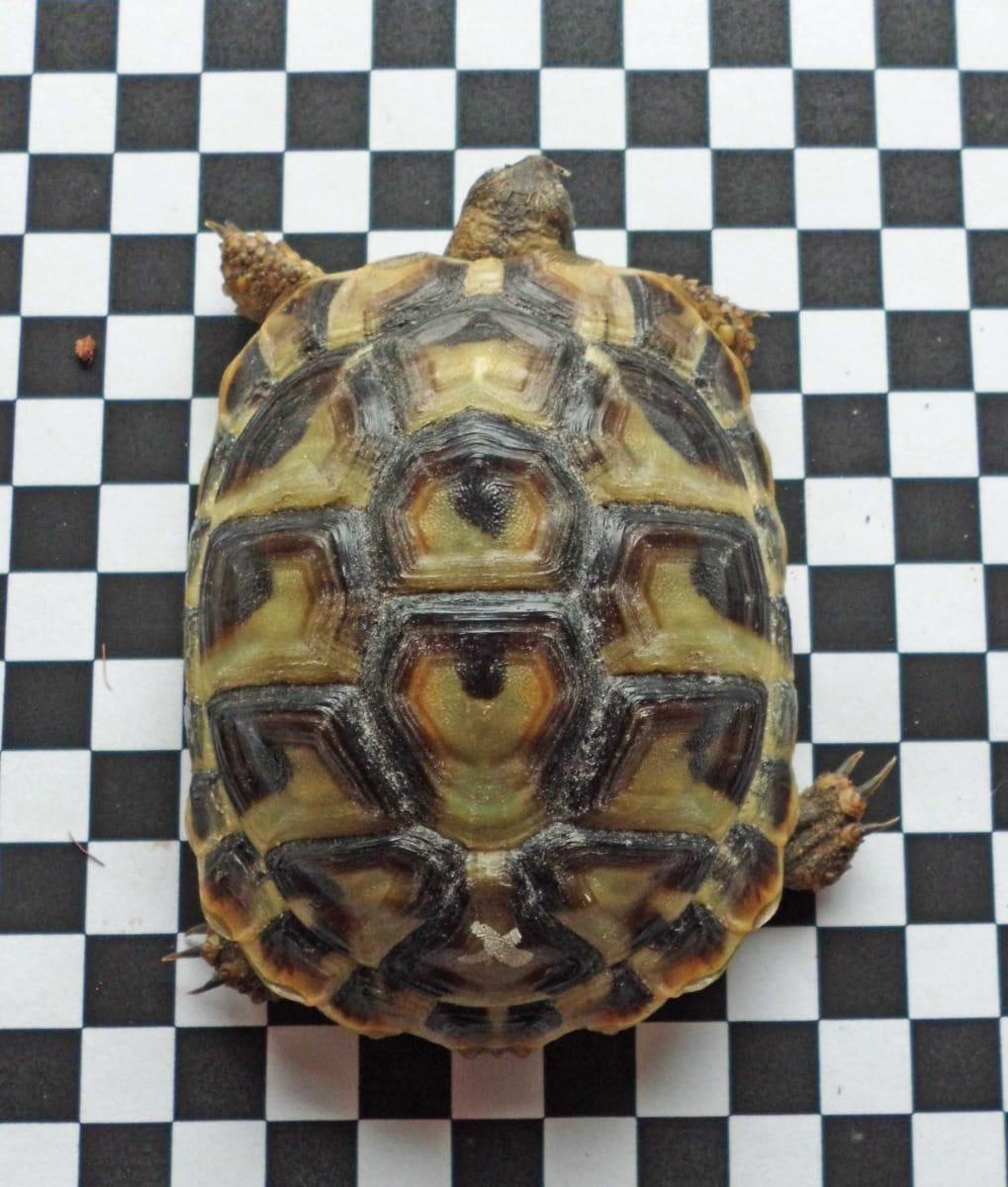 Schildkröten Kaufen Verkaufen Bayern Seite 9 Haustier Anzeiger