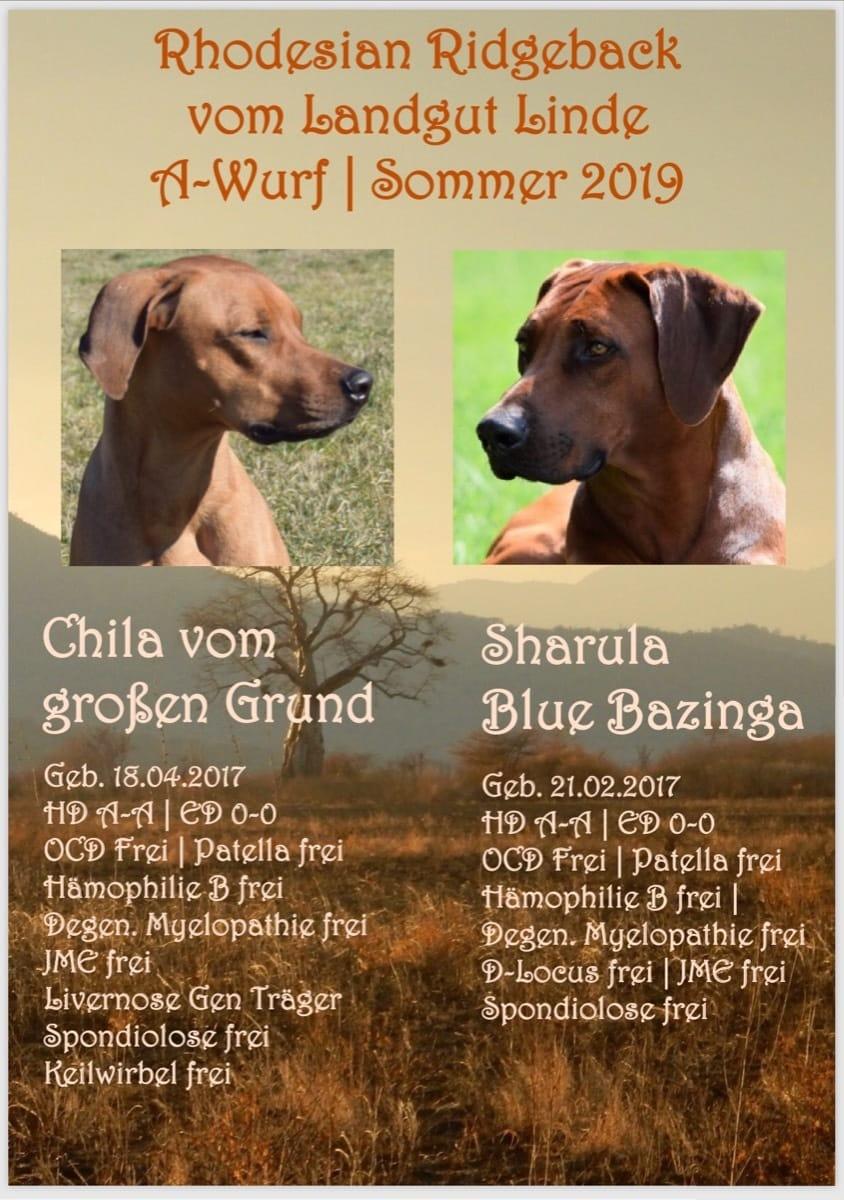 Rhodesian Ridgeback Welpen Günstig Kaufen Hunde Haustier Anzeiger