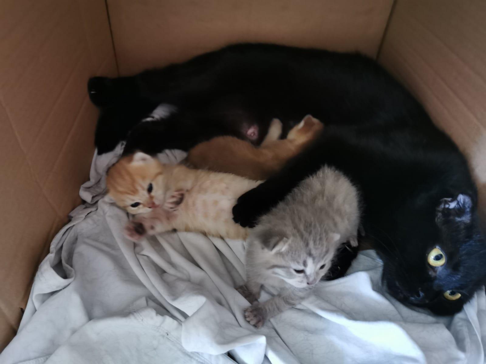 Katzen zu verschenken berlin