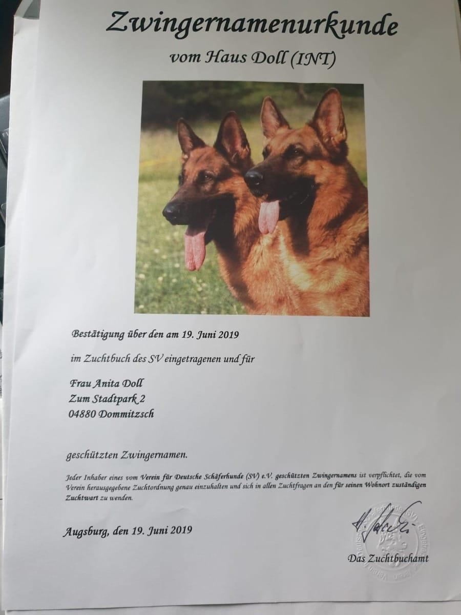 Deutscher Schaferhund Welpen Mit Und Ohne Papiere Hunde Haustier Anzeiger