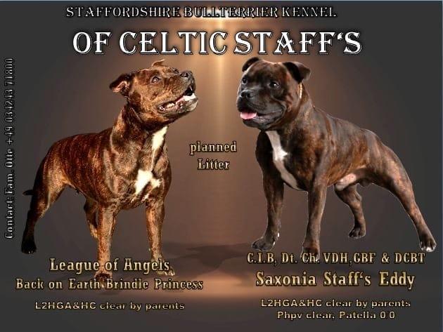 Staffordshire Terrier Welpen Rassehunde Hunde Welpen