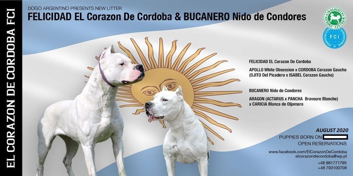 Hunde Welpen Kaufen Verkaufen Polen Haustier Anzeiger