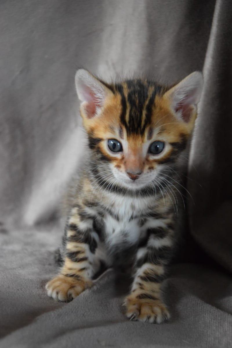 Katzen Kaufen Darmstadt
