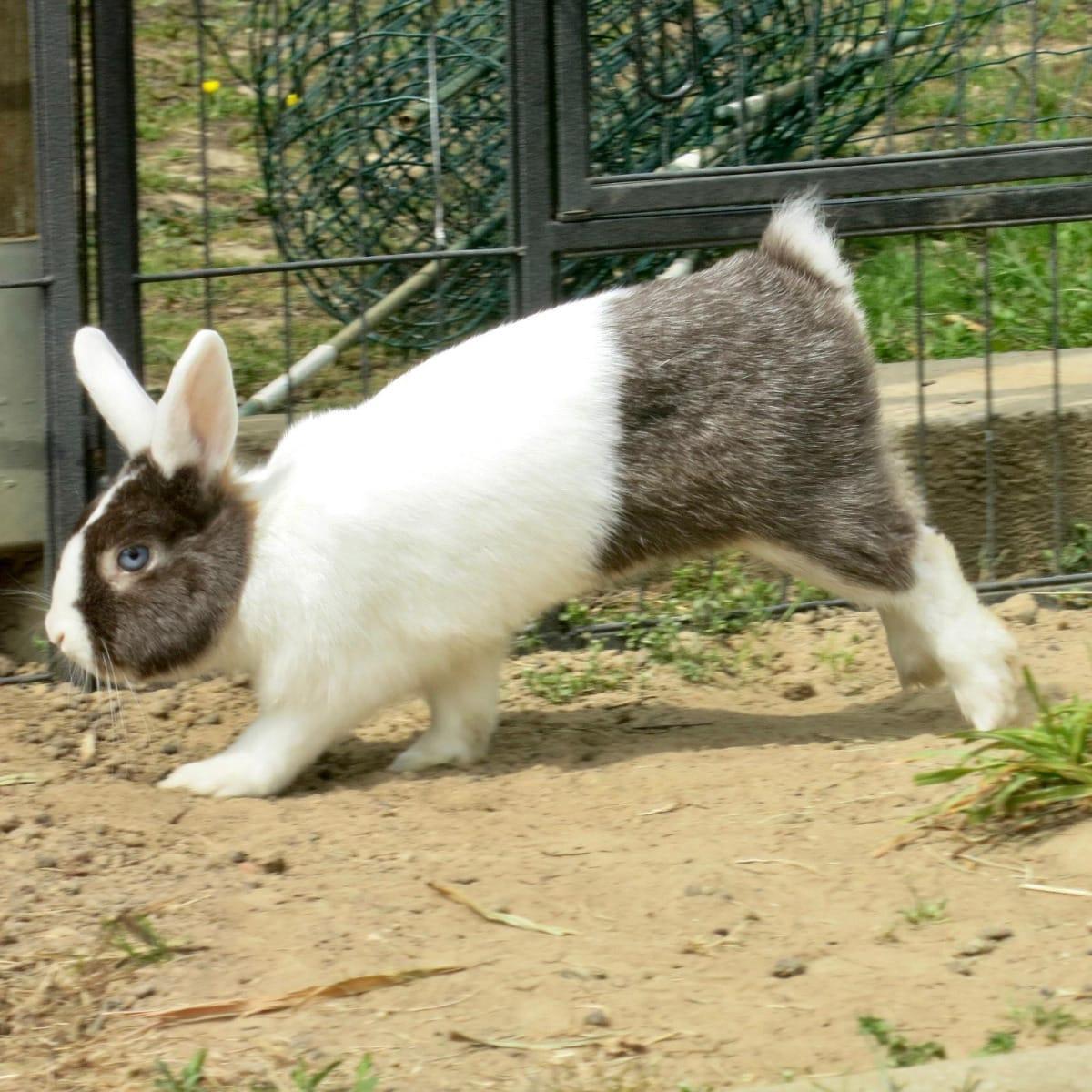 Kaninchen Hasen Seite 19 Haustier Anzeiger