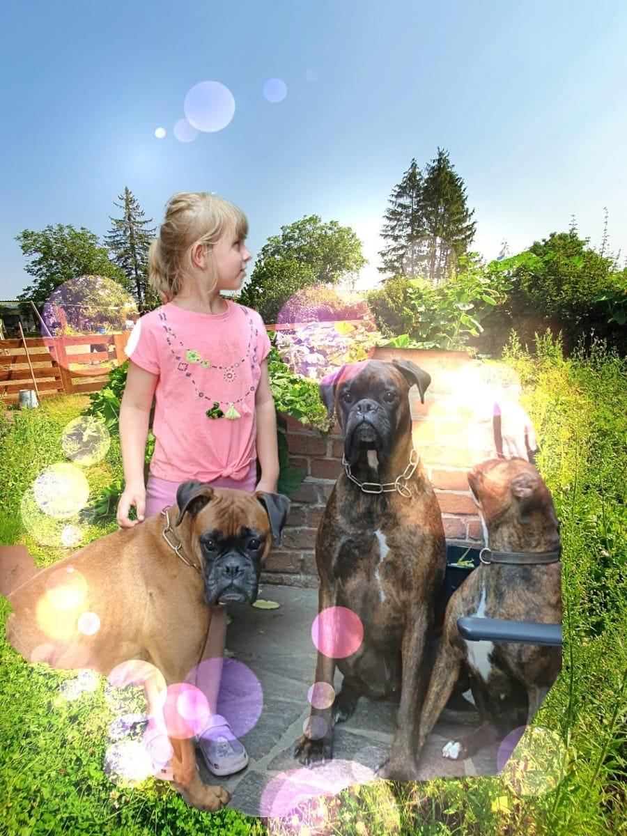 Boxer Welpen Rassehunde Hunde Welpen Haustier Anzeiger