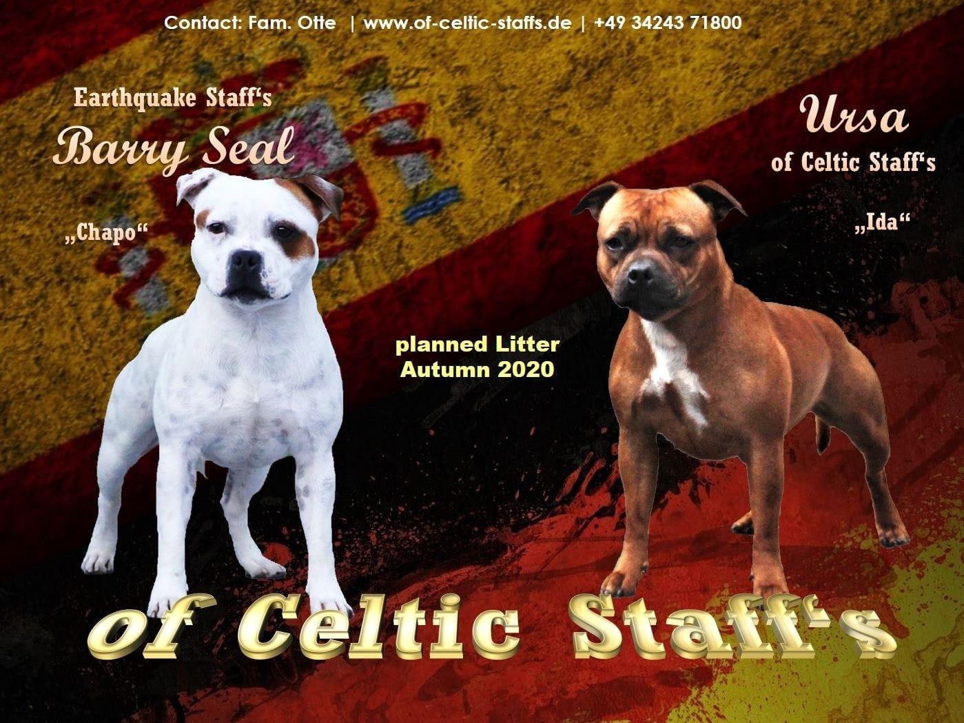 Staffordshire Terrier Welpen Rassehunde Hunde Welpen Haustier Anzeiger