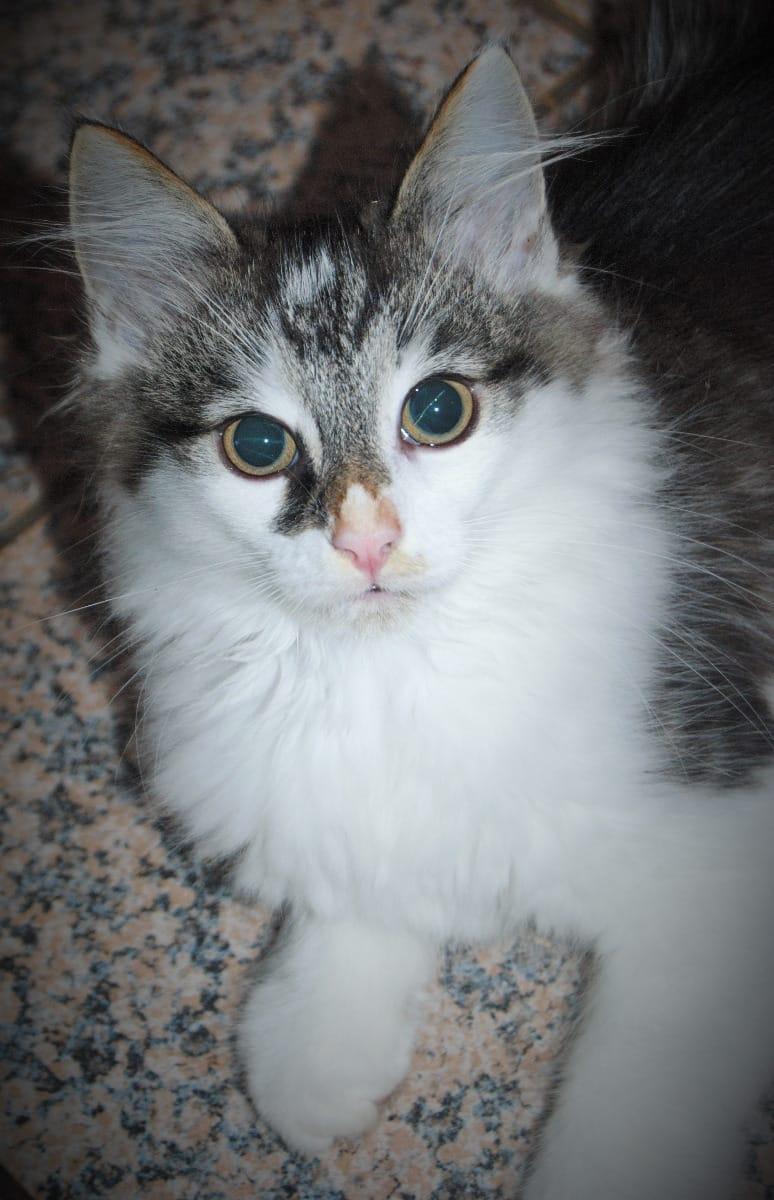 mischlingskatzen seite 10 | haustier-anzeiger