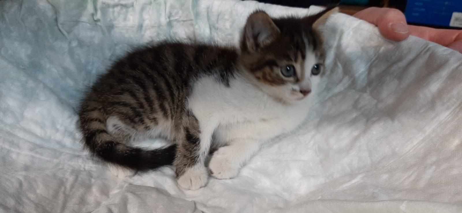 Kleine Katzenbabys