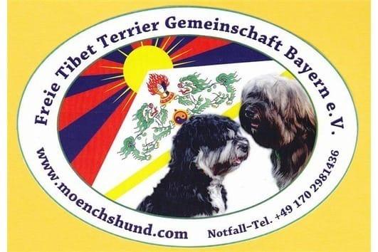 Bezaubernde Tibet Terrier Welpen Tibet Terrier Welpe Tibet Terrier Terrier